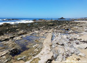 tide pools cameo shores beach newport beach city guide