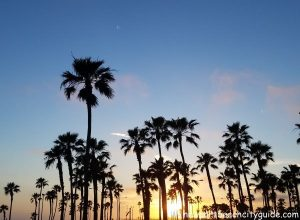 palm trees at sunset balboa pier beach newport beach city guide